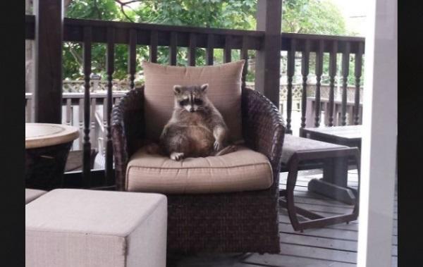 こんにちは 家を訪ねてきた動物1