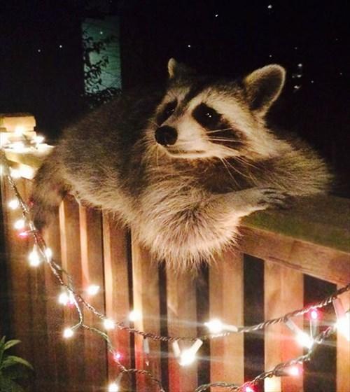 こんにちは 家を訪ねてきた動物13