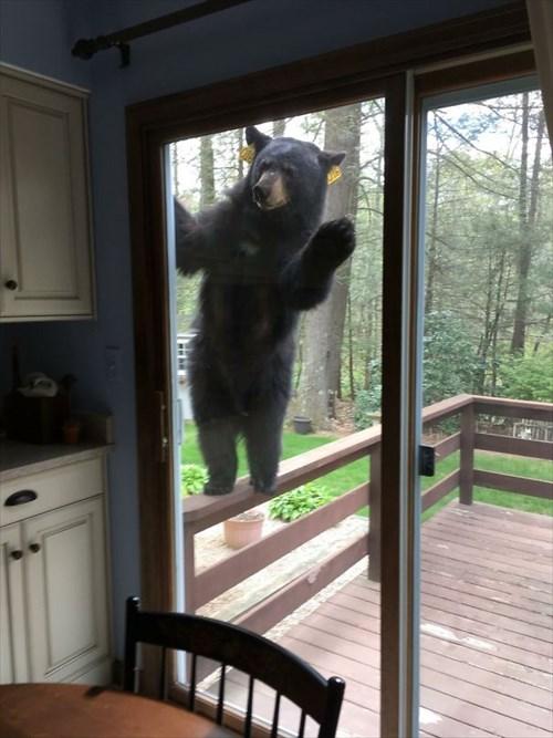 こんにちは 家を訪ねてきた動物5