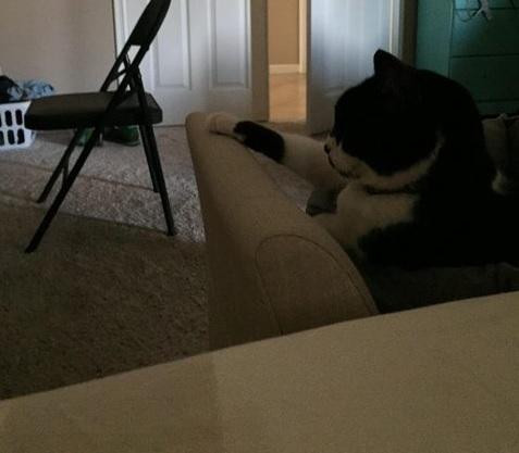 手を置く猫5