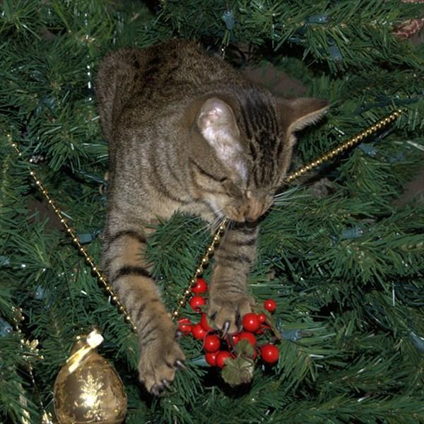 クリスマスツリー 猫のおもちゃ11