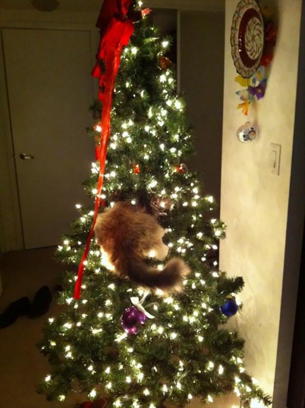 クリスマスツリー 猫のおもちゃ14