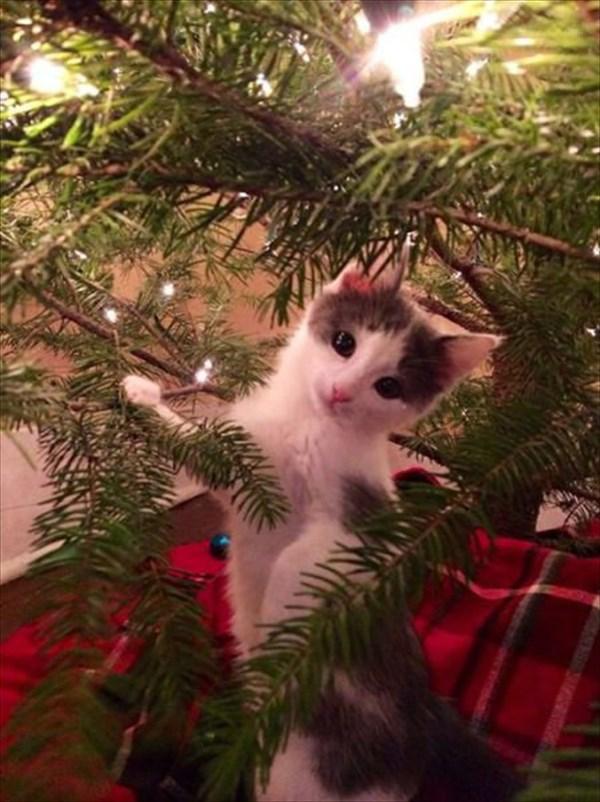 クリスマスツリー 猫のおもちゃ17