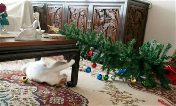 クリスマスツリー 猫のおもちゃ18