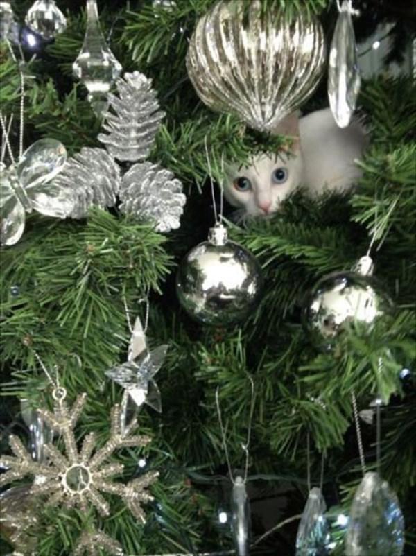 クリスマスツリー 猫のおもちゃ4
