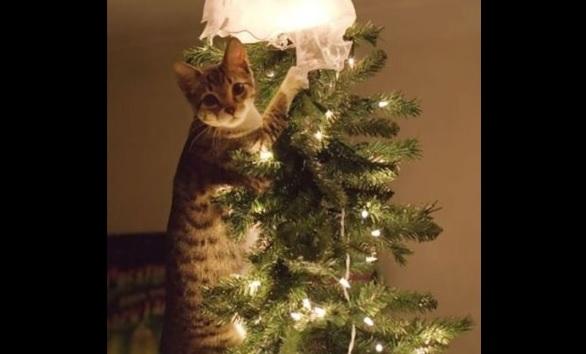クリスマスツリー 猫のおもちゃ1