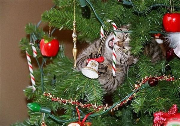 クリスマスツリー 猫のおもちゃ5