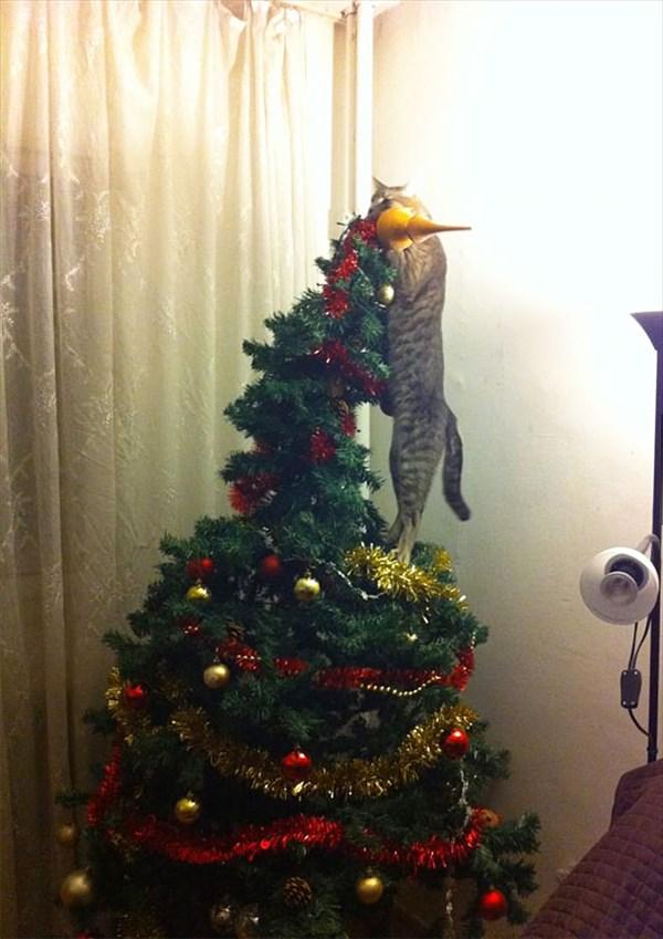 クリスマスツリー 猫のおもちゃ9