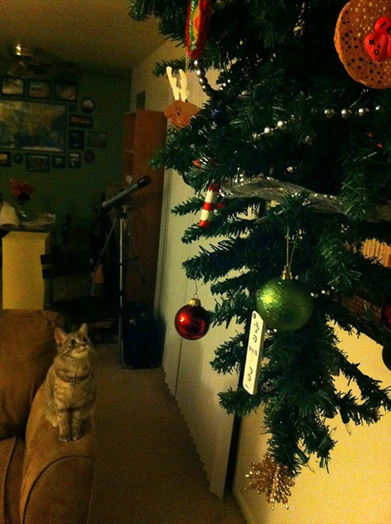 ペットからクリスマスツリーを守る対策13