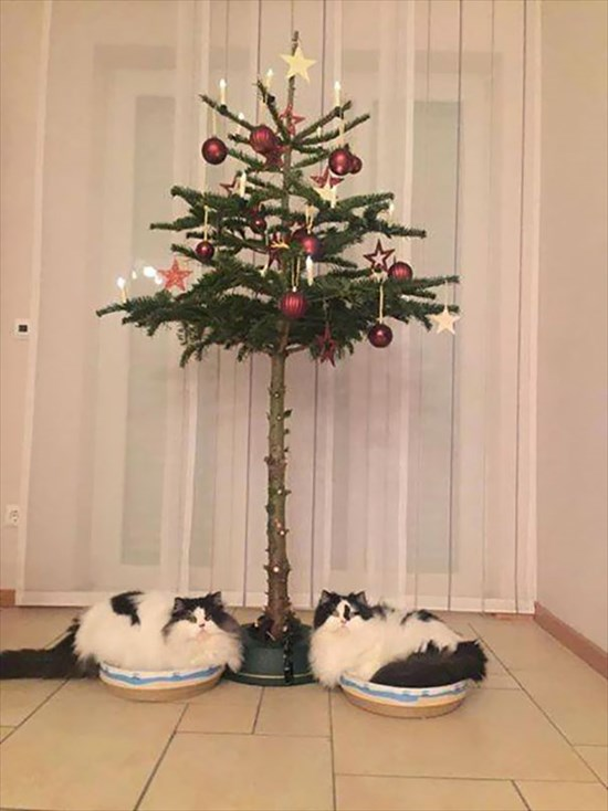ペットからクリスマスツリーを守る対策5