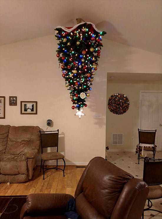 ペットからクリスマスツリーを守る対策12