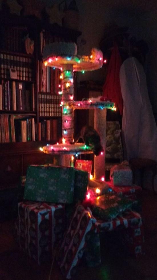 ペットからクリスマスツリーを守る対策17
