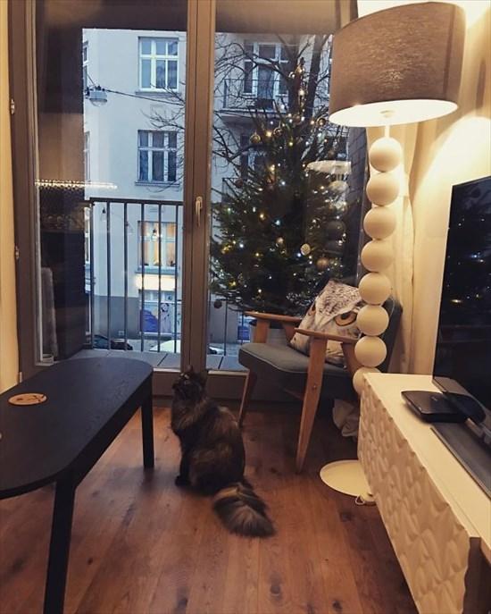 ペットからクリスマスツリーを守る対策9