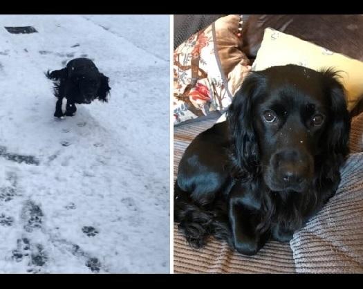 雪を初めて体験した犬1