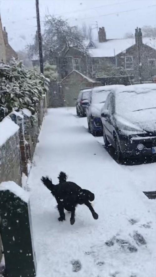 雪を初めて体験した犬4