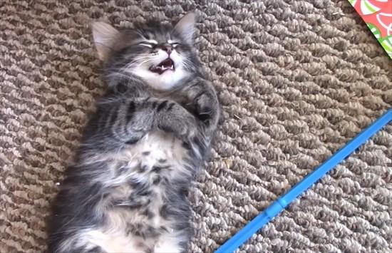 電池が切れた子猫6