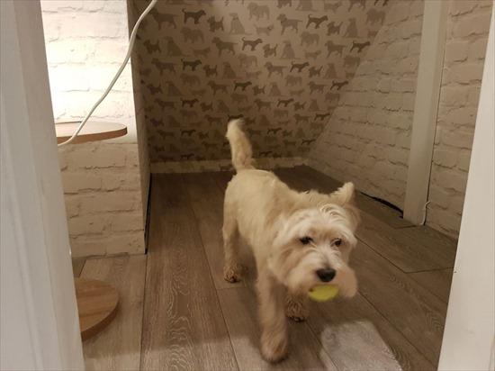 愛犬ためにお部屋を作った11