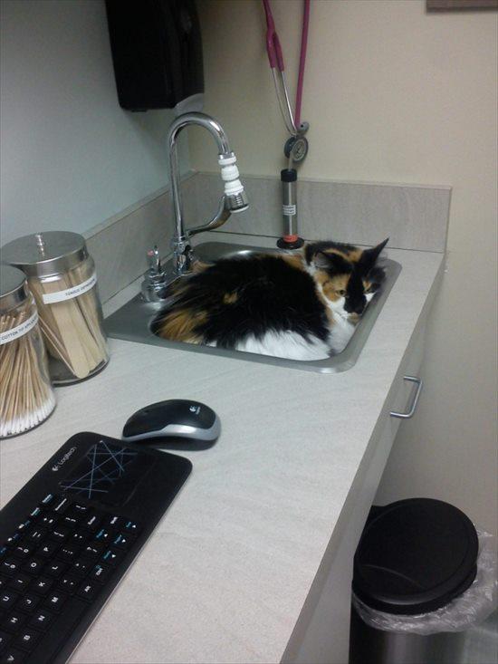 動物病院嫌い 猫4