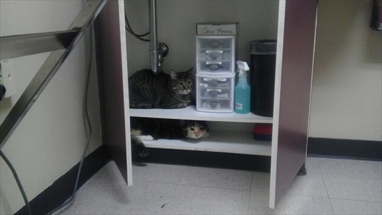 動物病院嫌い 猫8