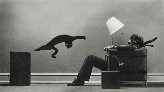 猫 コラ画像16