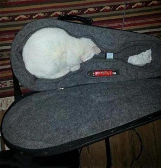 猫は液体 画像7