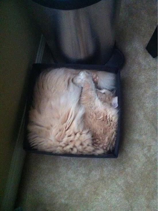 猫は液体 画像6