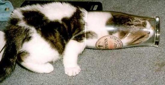 猫の液体化