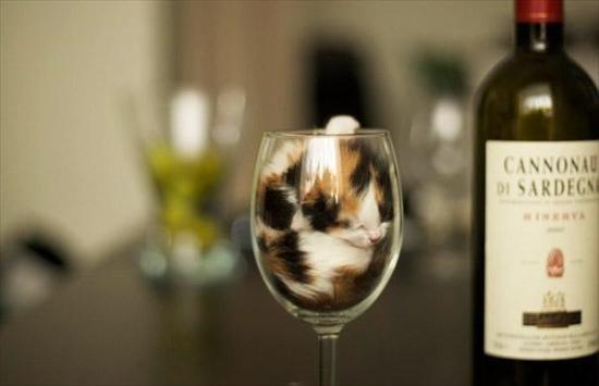 猫は飲み物