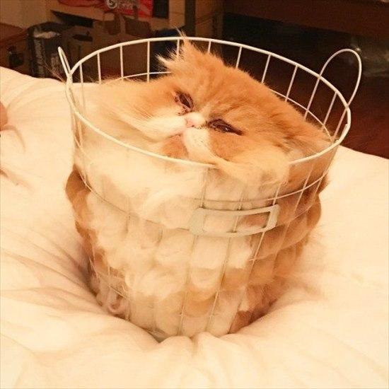 猫は液体 画像2