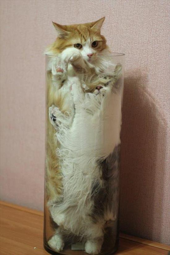 イグノーベル賞 猫