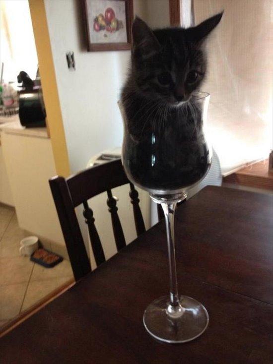 猫は飲み物2