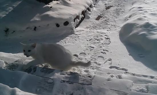 散歩 猫1
