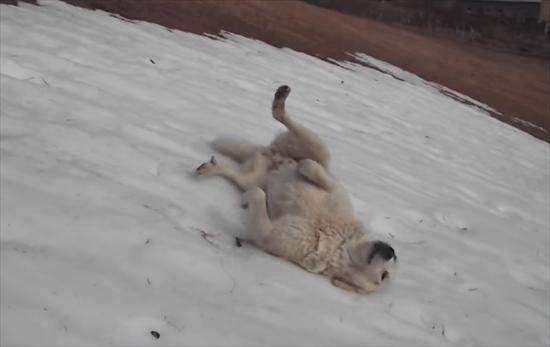 雪にはしゃぐ犬