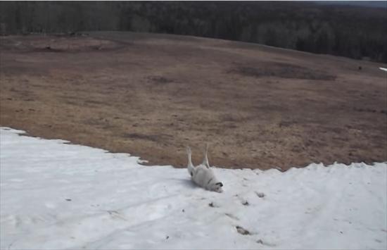 雪すべりにハマる犬2