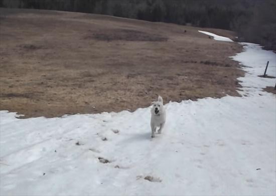 雪すべりにハマる犬3