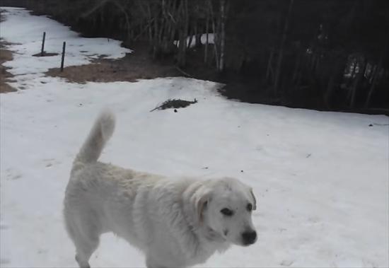 雪すべりにハマる犬4