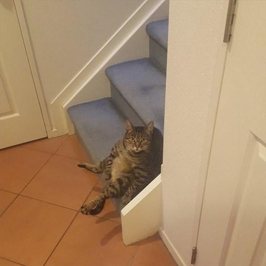 猫 毛づくろい写真9