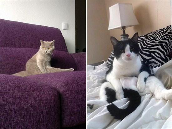 猫 毛づくろい写真3