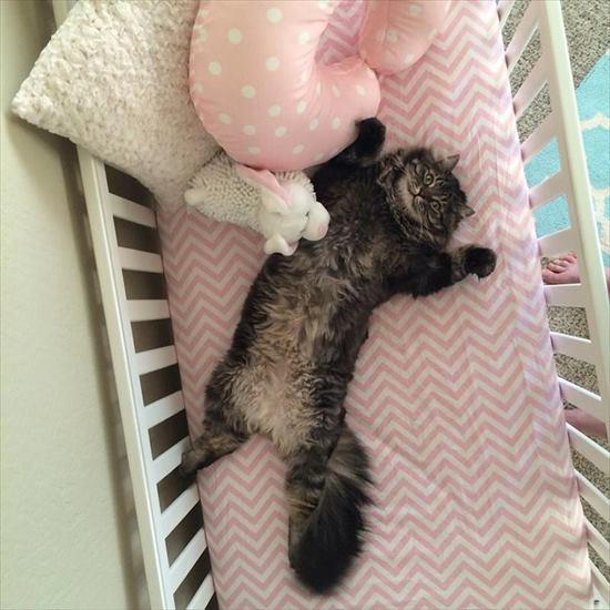ベビーベッド 猫2