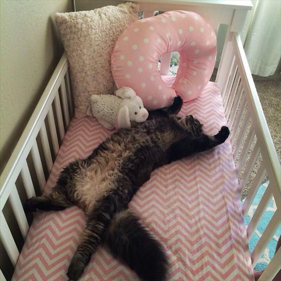 ベビーベッド 猫4