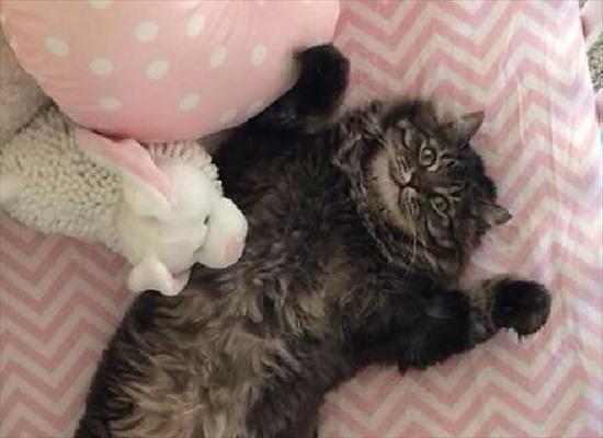 ベビーベッド 猫3