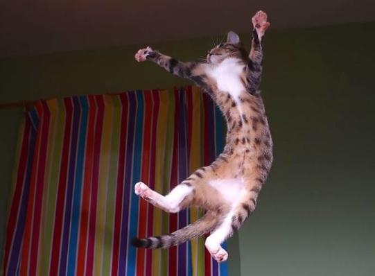 子猫 ジャンプ 写真1