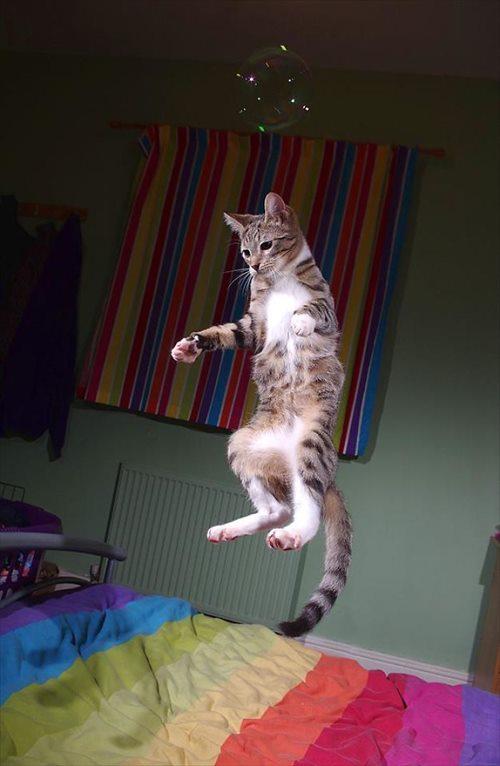子猫 ジャンプ 写真9