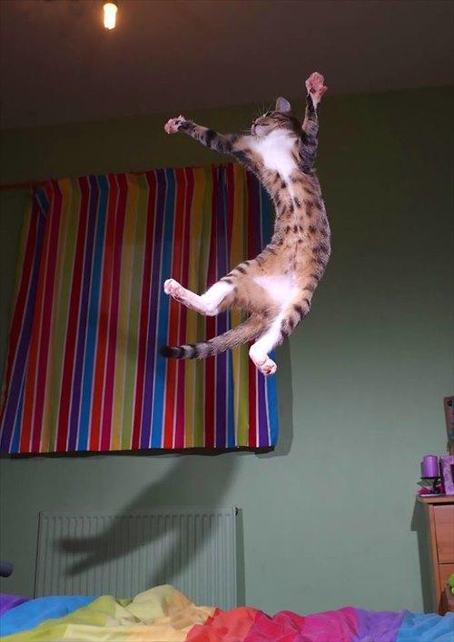 子猫 ジャンプ 写真10