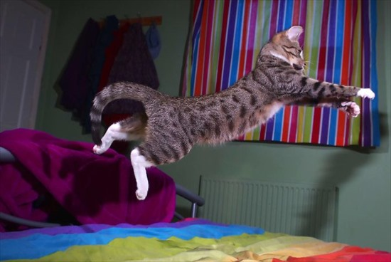 子猫 ジャンプ 写真7
