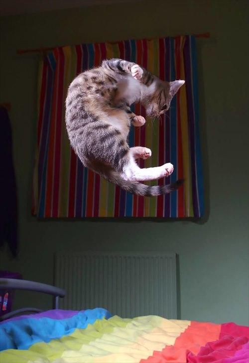 子猫 ジャンプ 写真14