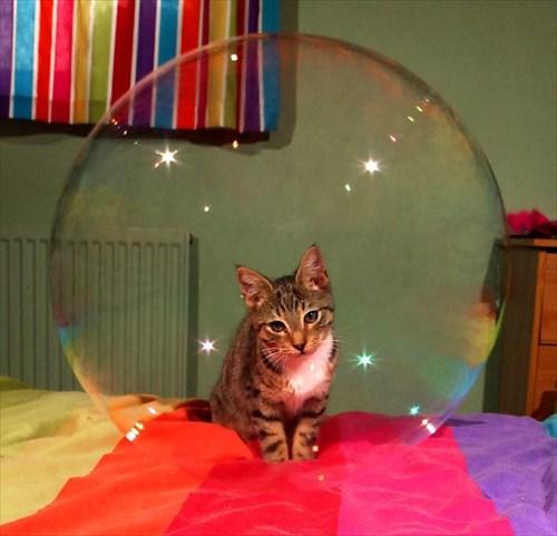 子猫 ジャンプ 写真18