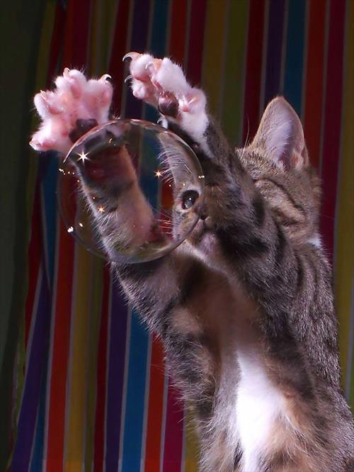 子猫 ジャンプ 写真17
