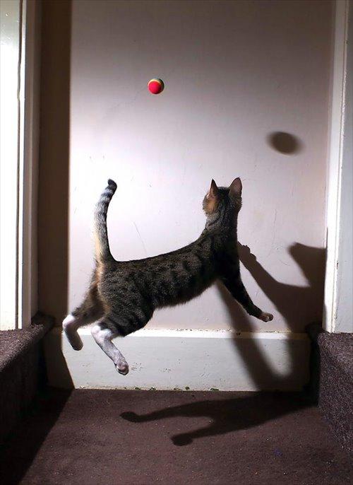 子猫 ジャンプ 写真15