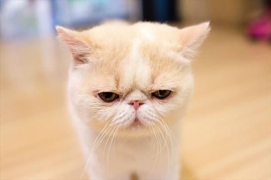 猫 不機嫌画像